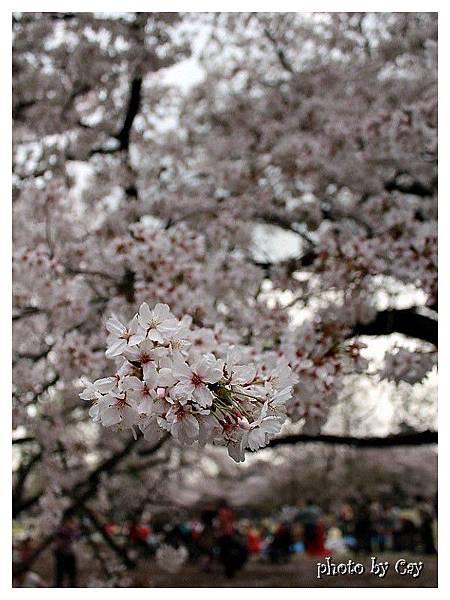 PhotoByCay_130329 173 (2)P01
