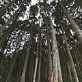木材與生活_1.jpg