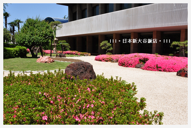 DSC_4919.JPG