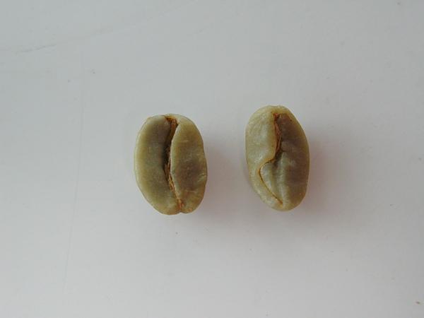 多心豆.jpg