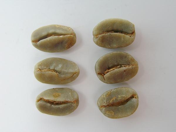 多心豆 (4).jpg