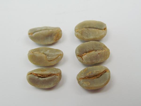 多心豆 (2).jpg