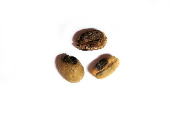 1-2部分黑豆IMG_0005.JPG