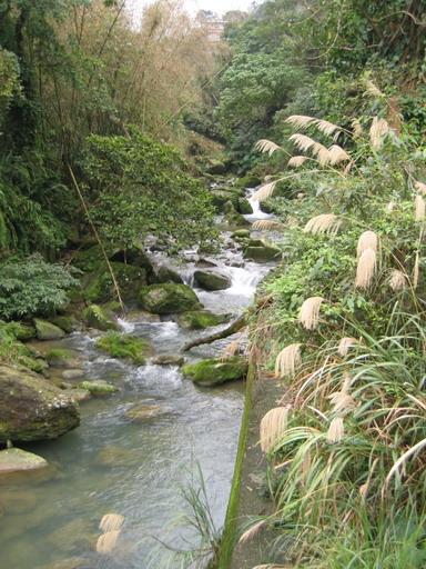 指南國小旁看到的溪流