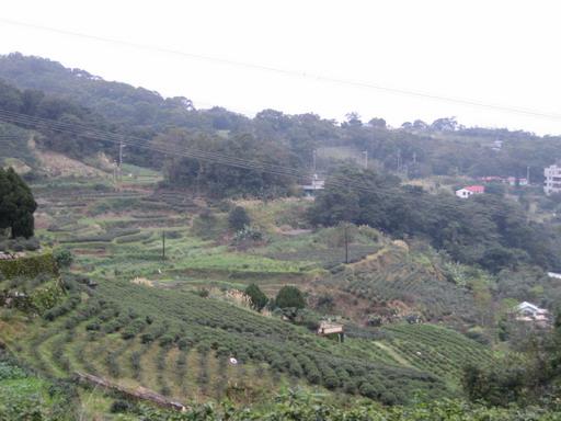 階梯式種植作物