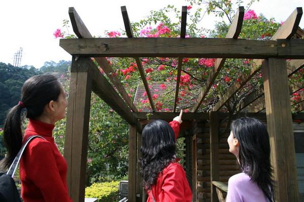 小忽說:看到一撮撮紅花,就會想到鳳仙姐