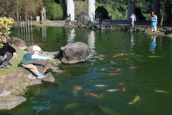小朋友在餵魚