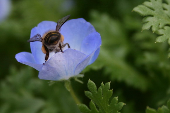 一進到vila就看到蜜蜂~