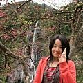 小如與櫻花、瀑布
