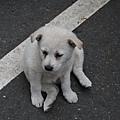 遇到一隻好Q的小狗狗