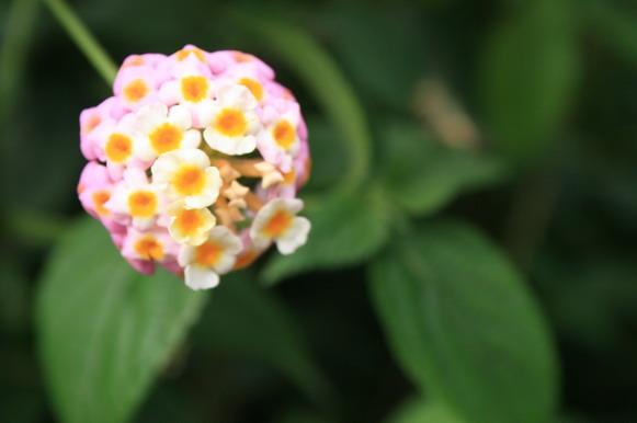 很可愛的花