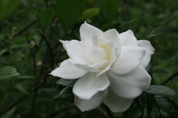 不知道叫啥名字的花