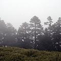 霧茫茫呀!