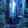 兒童館--愛的森林入口