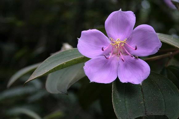 又遇見這紫色不知名花