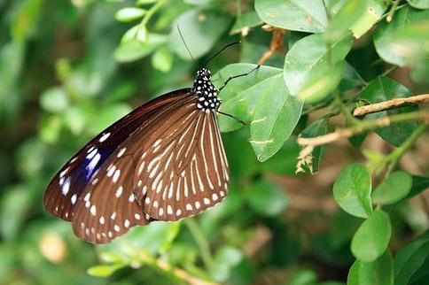 蝴蝶讓我一直拍,都不飛走耶!