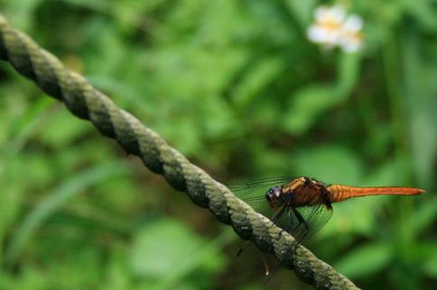 無意間有蜻蜓飛來