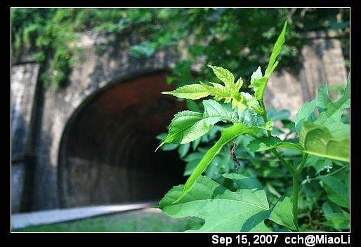 年輕小草與老舊隧道