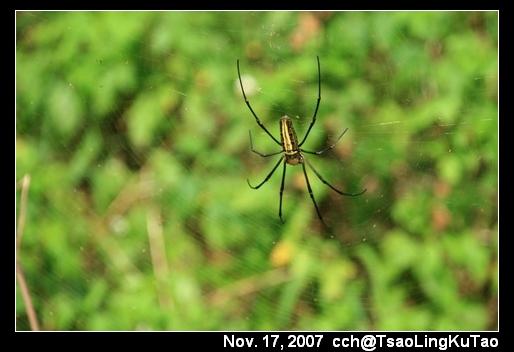 路上很多這種大蜘蛛