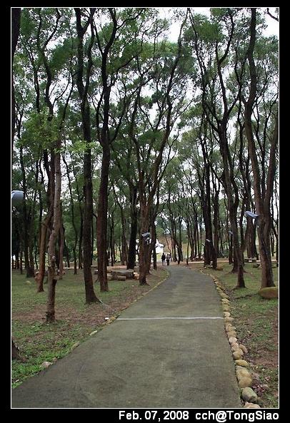 樟樹林步道