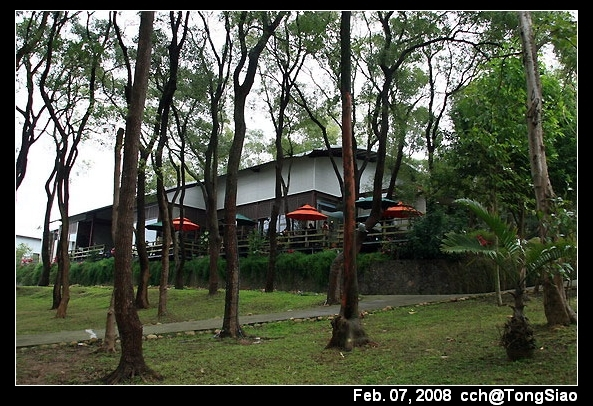 從樟樹林看用餐區