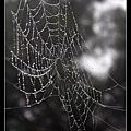 蜘蛛網帶水珠