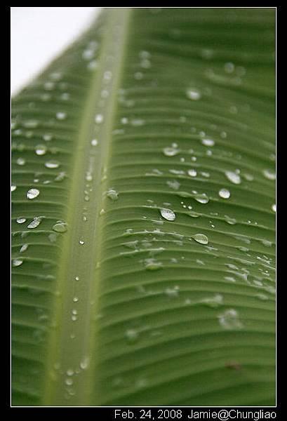 一直下雨喂~