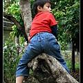 能爬樹的童年是美好的