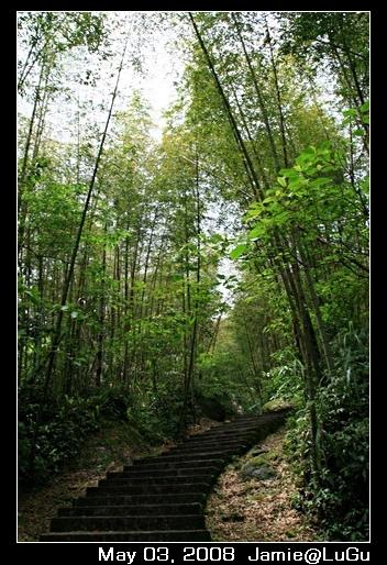 這次旅程其實很少看到的竹子