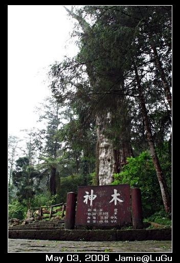 台灣到處有神木