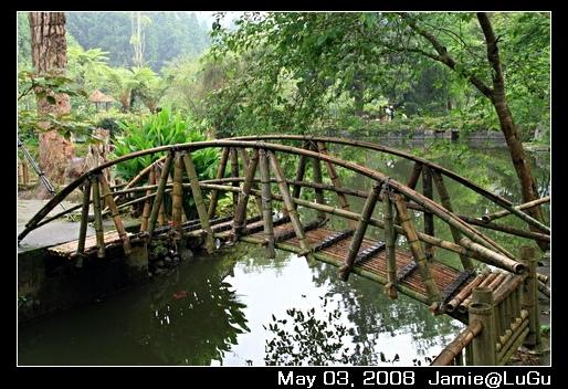 大學池旁小竹橋