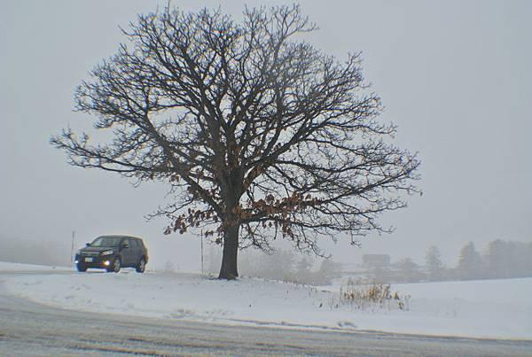 Mild Seven之樹-之剛好有車經過