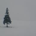 遺世的聖誕樹
