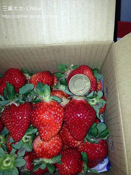 ▌苗栗▐ 大湖採草莓 (上集) ~ 私房景點分享