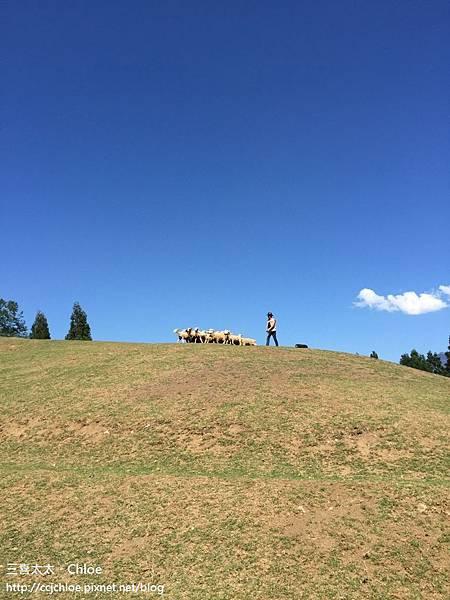 清境農場。青青草原。