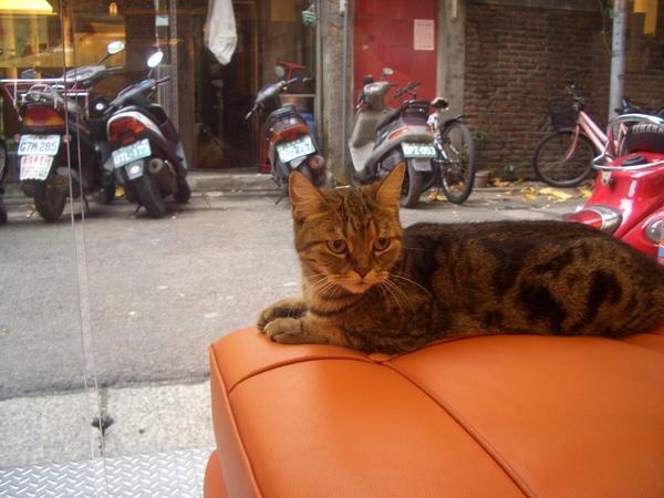 理髮店-京軒的貓-2