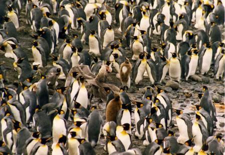 69群集的企鵝.jpg