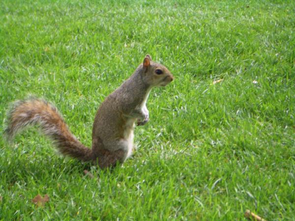 小松鼠並不怕人,看到有人餵食,還會主動爬過來