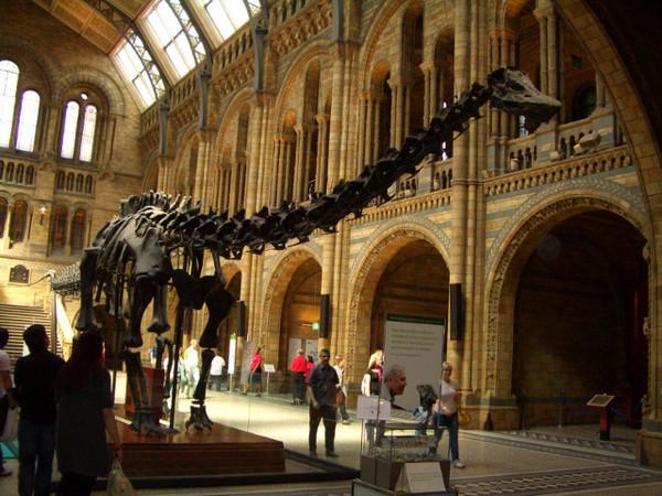 一進大廳所有的遊客都被恐龍標本吸引住