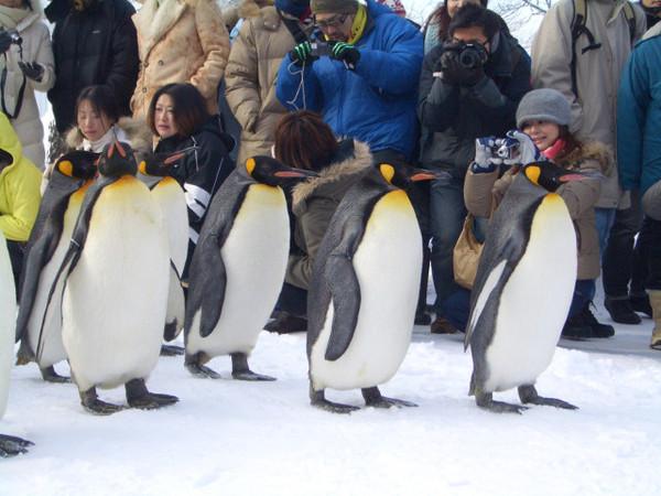 後面跟著老神仔仔的大企鵝
