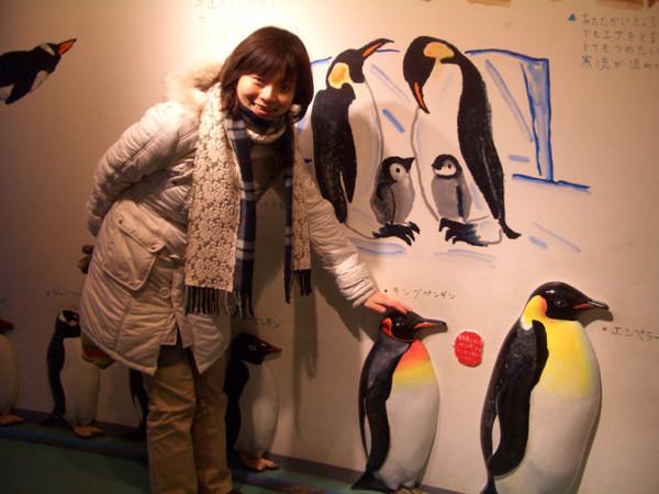 企鵝大小約到我的膝蓋左右