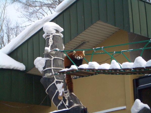 小浣熊過天橋