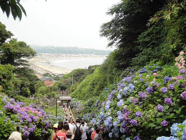 這個景很有名,後面看得到湘南海岸