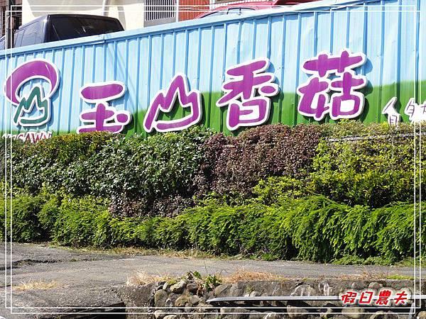 玉山香菇DSC05254.jpg