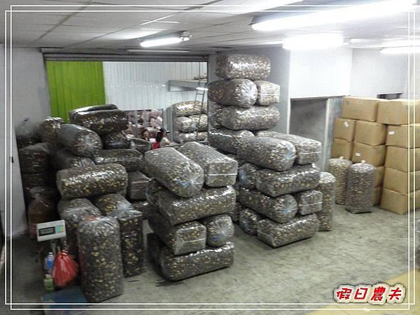 玉山香菇DSC05287.jpg