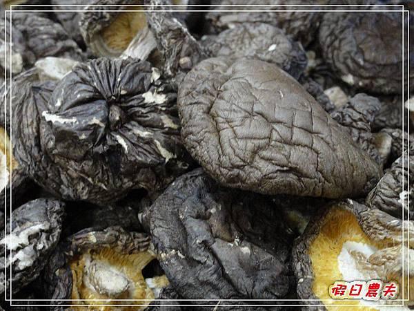 玉山香菇DSC05297.jpg