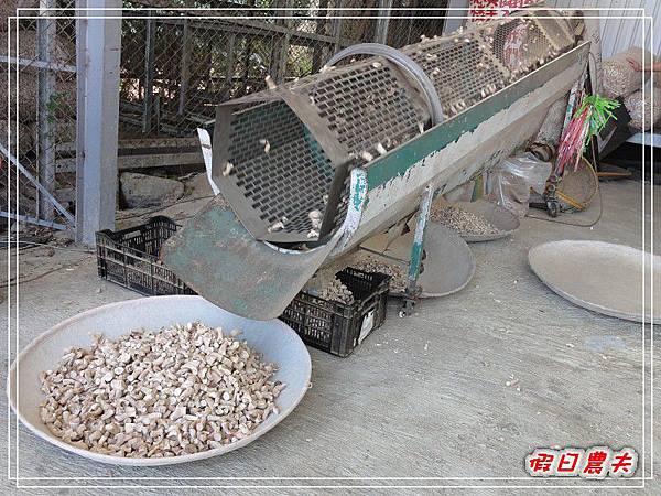 玉山香菇DSC05313.jpg