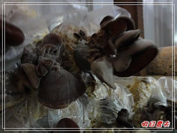 百菇莊DSC05502.jpg