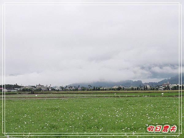 新社花海DSC06561.jpg