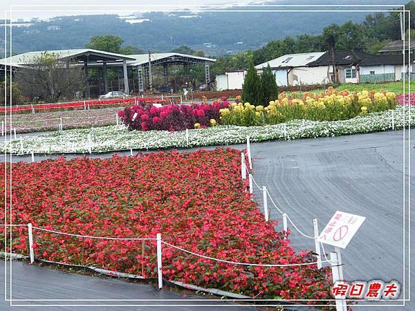 新社花海DSCF2502.jpg